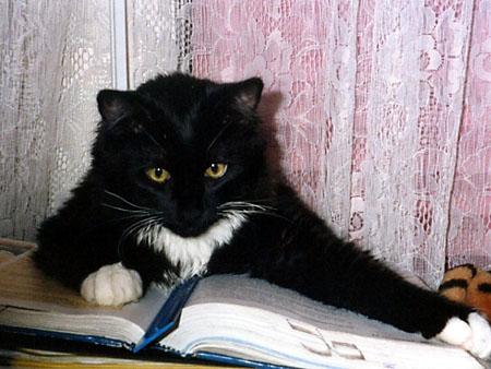 http://davidoss.narod.ru/cats/2.jpg